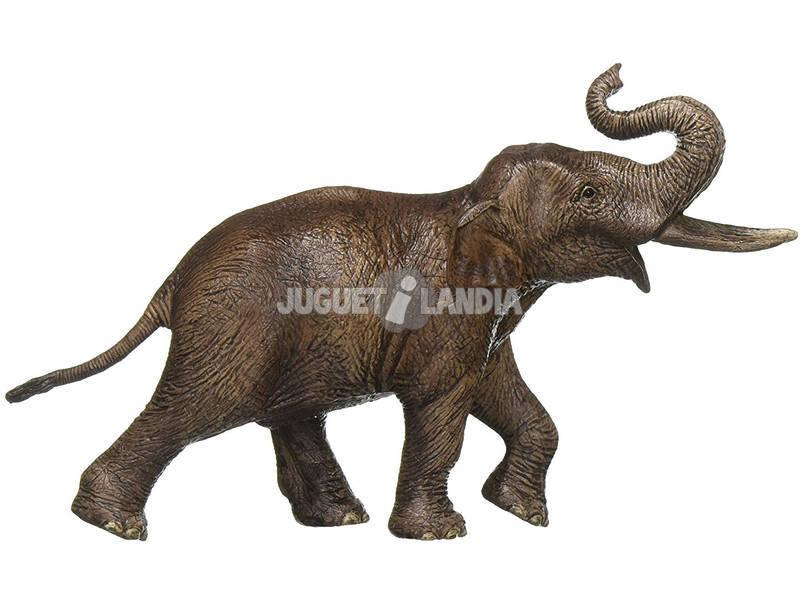 Elefante Asiatico Macho