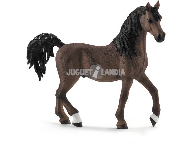 Cavalo Semental Árabe