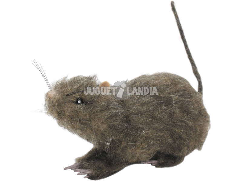 Rata Peluda Grande