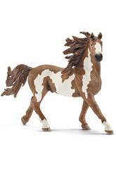 Pferd Pinto