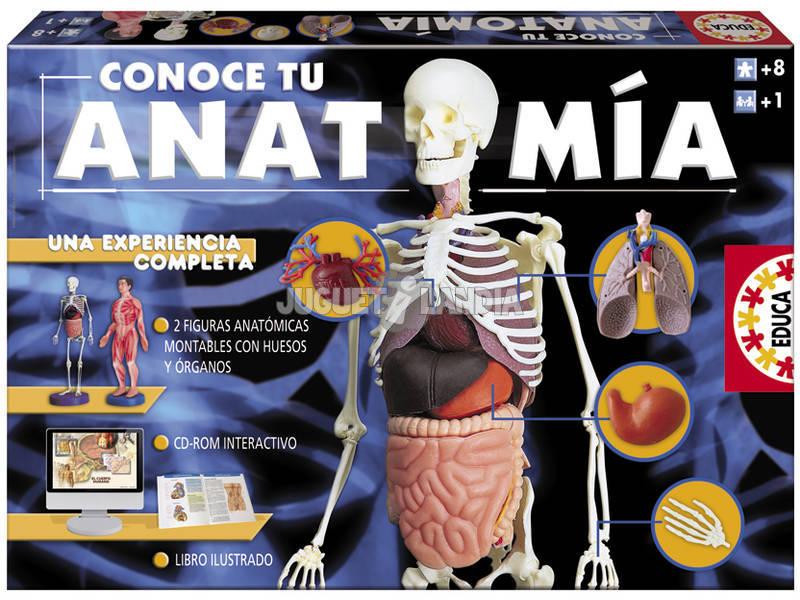 Conoce tu anatomia - Juguetilandia